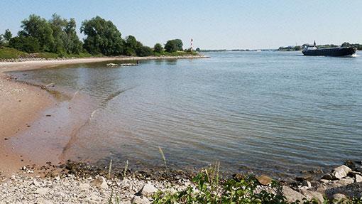 Angler am Rhein bei Niedrigwasser